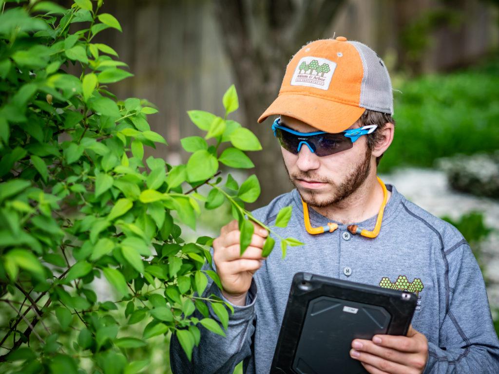 tree fertilization service columbus ohio